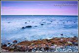 Jasmund, labutě kymácející se na moři