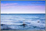 Jasmund, národní park, Německo, labuť na kameni v moři