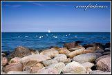 Labutě a plachetnice v Baltu
