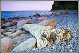 Dřevěná kláda na břehu moře v NP Jasmund, Německo