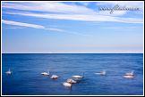 Baltské moře s plujícími labutěmi