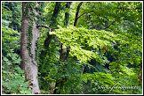 Národní park Jasmund, les