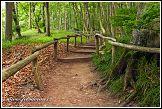 Jasmund, turistický chodník v lese národního parku