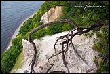 Jasmund, křídové útesy a vzdušné kořeny stromů