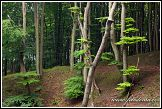 Les v národním parku Jasmund, Německo