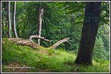Les v národním parku Jasmund