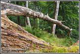 Prales v národním parku Jasmund v severním Německu
