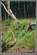 Les v národním parku Jasmund v Německu