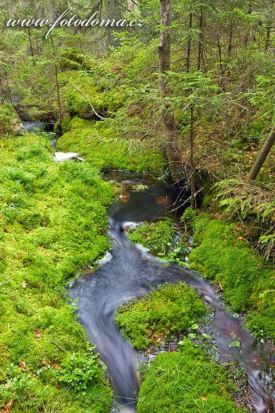 Tiveden, národní park, Švédsko, potůček v lese