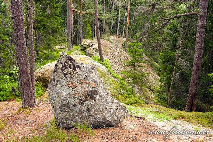 Les s bludnými balvany v národním parku Tiveden, Švédsko