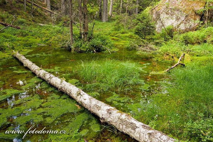 Lesní tůňka v národním parku Tiveden, Švédsko
