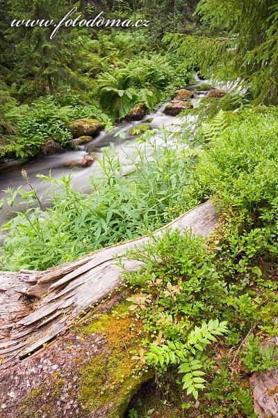 Potok tekoucí z vodopádu Njupeskär v národním parku Fulufjället