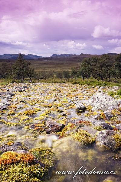 Krajina s potůčkem v národním parku Femundsmarka