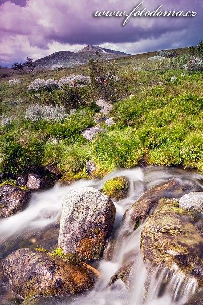 Krajina s vrcholem Elgahogna v národním parku Femundsmarka