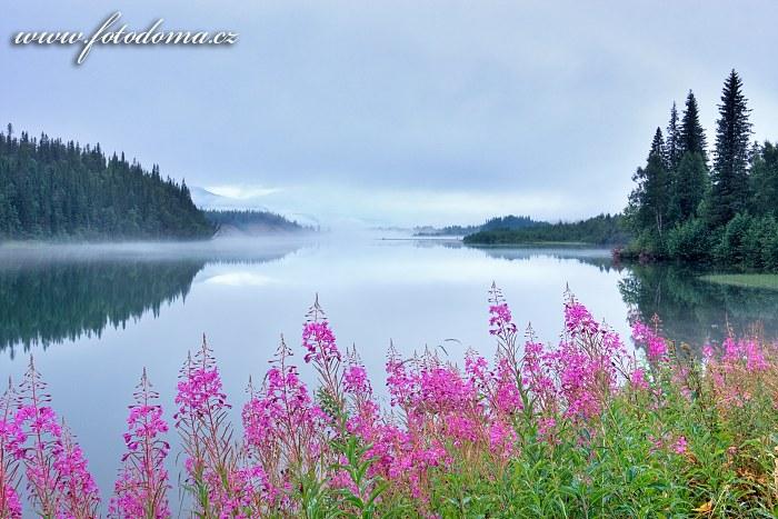 Mlha na řece Langvassåga poblíž města Mo i Rana a vrbovky na břehu, Norsko