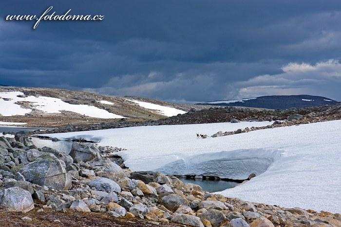 Sobi na sněhovém poli pod vrcholem Steindalstinden. Národní park Saltfjellet-Svartisen, kraj Nordland, Norsko