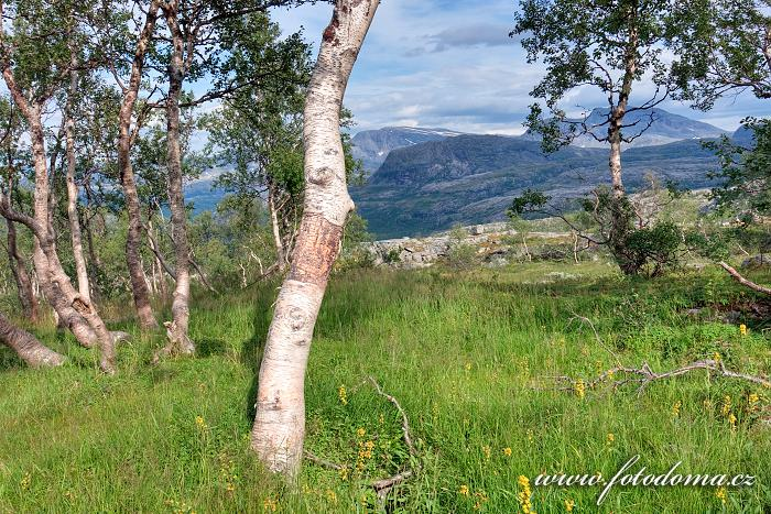 Lesík, národní park Rago, kraj Nordland, Norsko