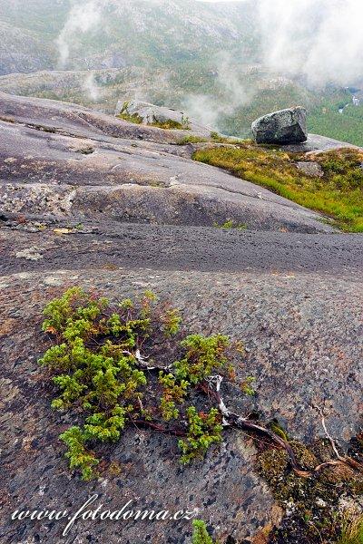 Vegetace v národním parku Rago, Norsko