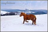 Kůň na Zikmundově