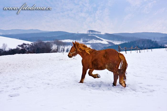 Kůň na Zikmundově, Staré Hutě