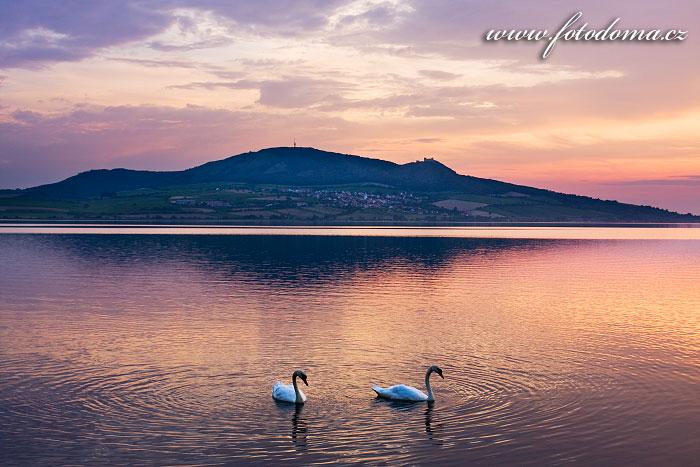 Pálava a labutě