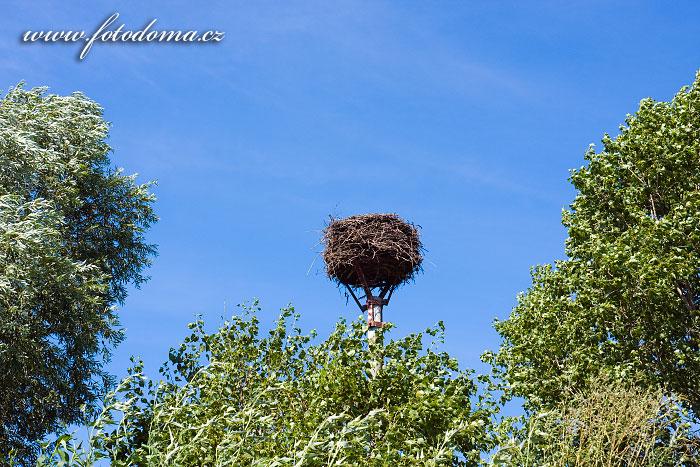 Čapí hnízdo u Rakvic