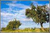 Jabloně u Bukovna