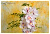 Květinová vazba s orchidejí