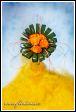 Květinové aranžmá s růžemi ve váze