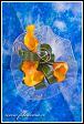 Květinové aranžmá s kalami