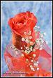 Květinové aranžmá s růží