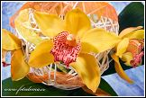 Květinové aranžmá s orchidejemi