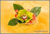 Květinové aranžmá s orchidejí