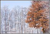 Zimní mrazem ojíněné stromy