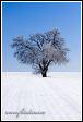 Zimní krajina se stromem