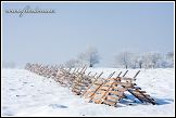 Sněholamy