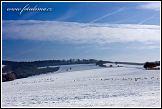 Stádo srnek v zimní krajině u Tvarožné Lhoty, Bílé Karpaty