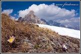Koniklec jarní na Creste de Zonia a Monte Averau, Dolomity