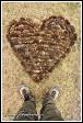 Srdce ze šišek