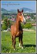 Kůň nad Mniším, Kopřivnice