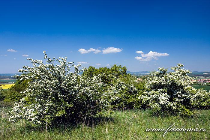 Horky u Milotic, přírodní rezervace