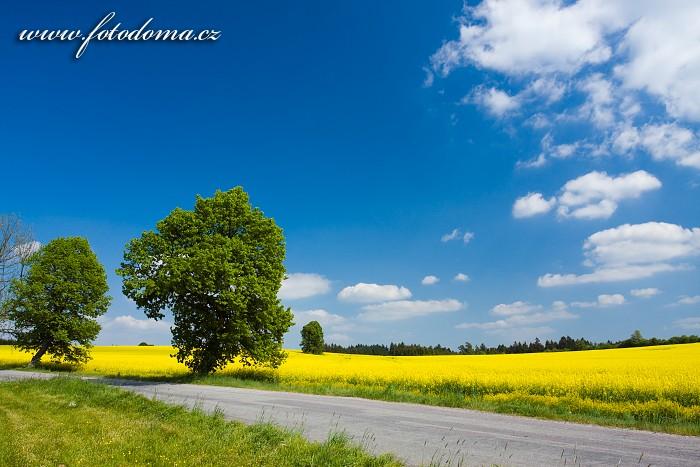 Silnice a řepkové pole u Valdeku