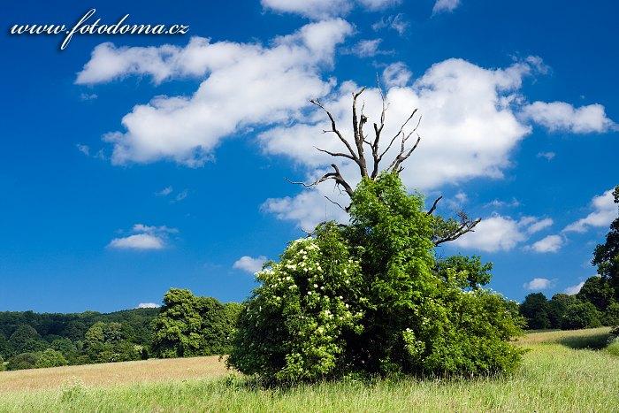 Čertoryje, národní přírodní rezervace, CHKO Bílé Karpaty