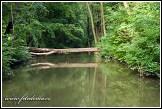 Kanál Moravy u Slovanského hradiště Mikulčice-Valy