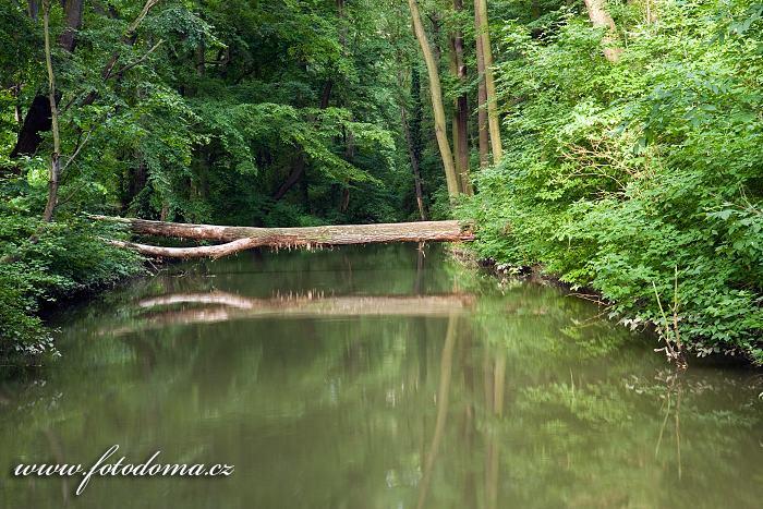 Kanál Moravy u Slovanského hradiště Valy u Mikulčic