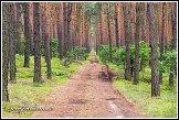 Požární cesta v borovém lese u obce Roztoka, Kampinoský národní park, Kampinoski Park Narodowy, Polsko