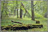 Bělověžský prales, Bělověžský národní park, Białowieski Park Narodowy, Polsko