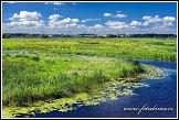 Řeka Narew u města Lapy, Narwianski národní park, Narwianski Park Narodowy, Polsko