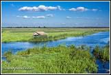 Řeka Narew u vesnice Waniewo, Narwianski národní park, Narwianski Park Narodowy, Polsko