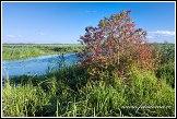 Řeka Narew u vesnice Kurowo, Narwianski národní park, Narwianski Park Narodowy, Polsko